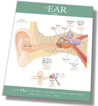 preview CID ear diagram spanish